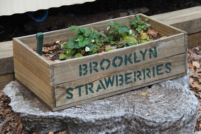 Brooklyn strawberries